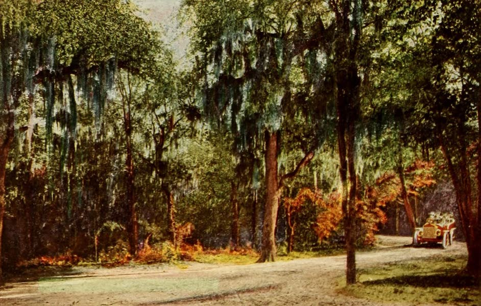 San Antonio, A Descriptive View Book in Colors - Brackenridge Park (1913)