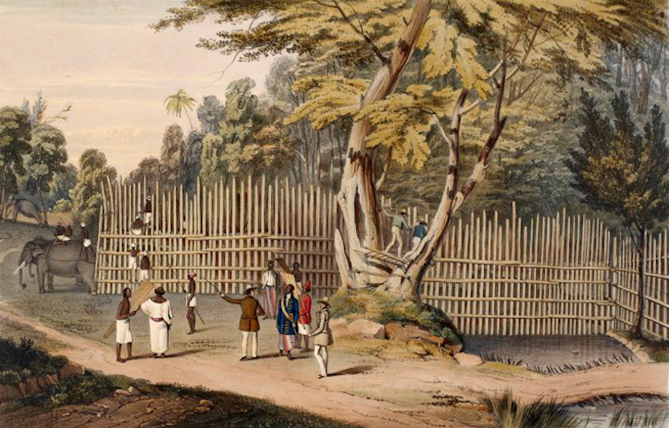Scenery and Reminiscences of Ceylon - The Great Elephant Kraal at Cottawya (1845)