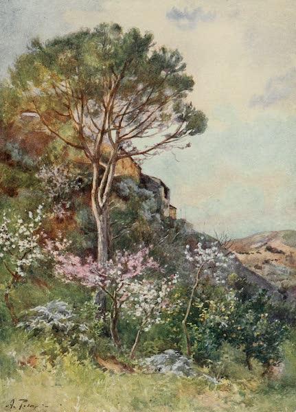Sicily, Painted and Described - Near Calatafimi (1911)