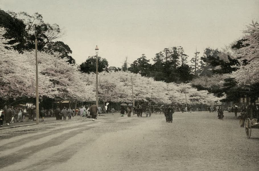 Sights and Scenes in Fair Japan - When the Cherry Blossom Blows, Uyeno Park, Tokyo (1910)