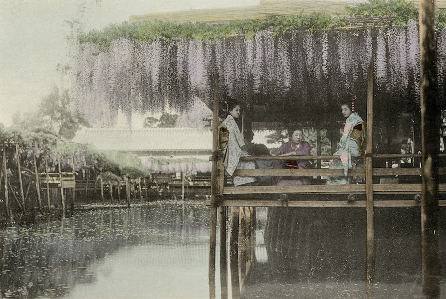 Sights and Scenes in Fair Japan - Under the Wistaria Arbour (1910)