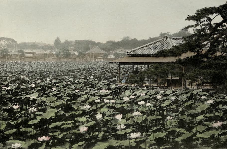 Sights and Scenes in Fair Japan - Lotus Lake in a Tokyo Park (1910)