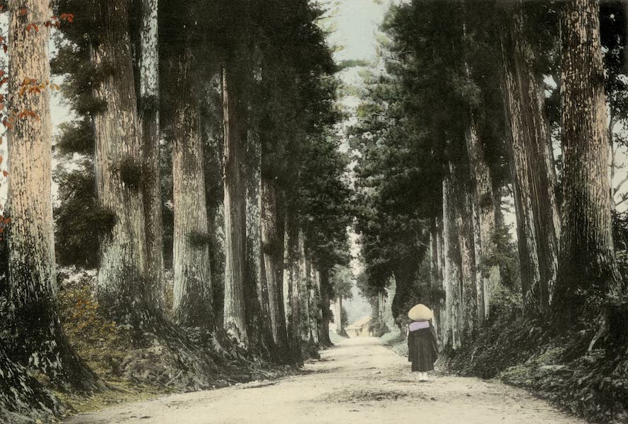 Sights and Scenes in Fair Japan - Avenue of Stately Cryptomerias with Buddhist Monk on His Itinerary (1910)