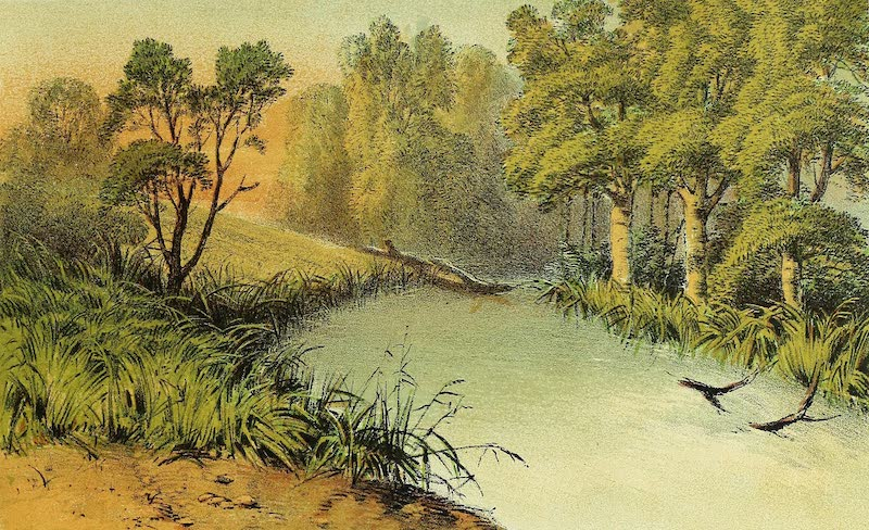 Sketches of African Scenery - Rapids on the Wami River (1878)