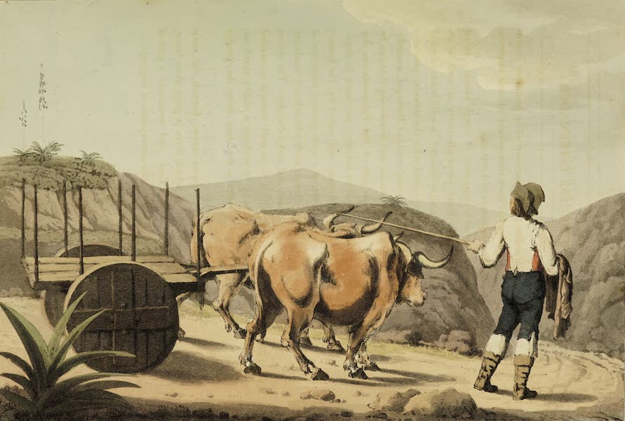 Sketches of Portugal and Spain - A Car of Portuguese Estramadura (1809)