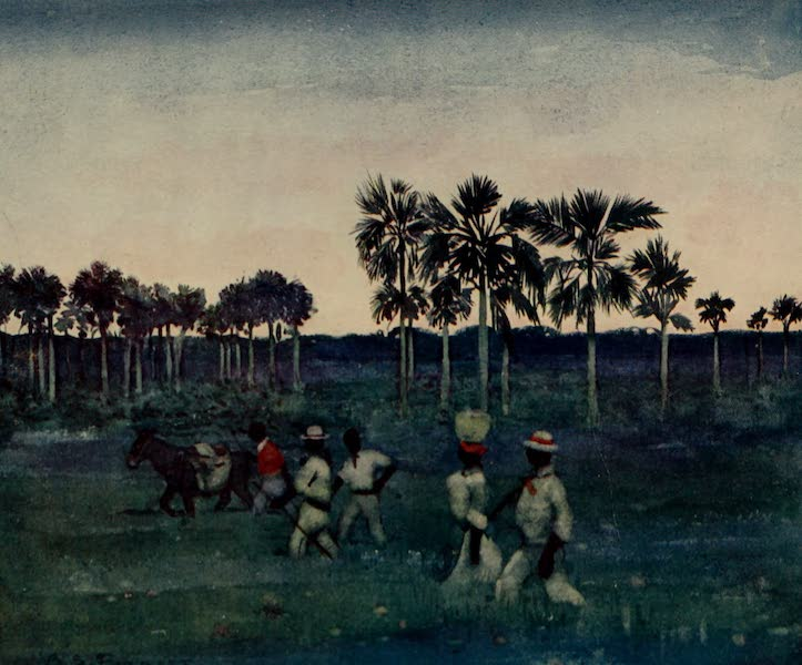 South America, Painted and Described - Palm Trees at Pirapora, Brazil (1912)