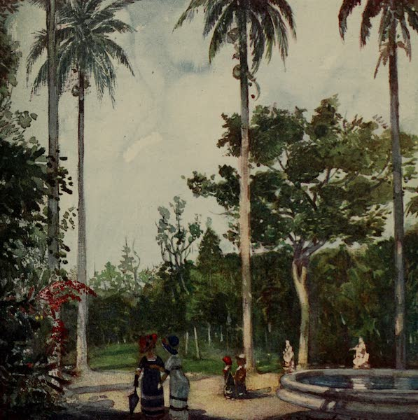 South America, Painted and Described - In the Botanical Gardens, Rio (1912)