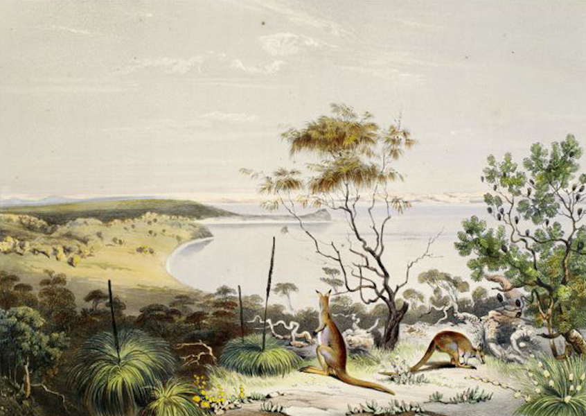 South Australia Illustrated - Scene on the Coorung, near Lake Albert, with a new species of Kangaroo (1847)
