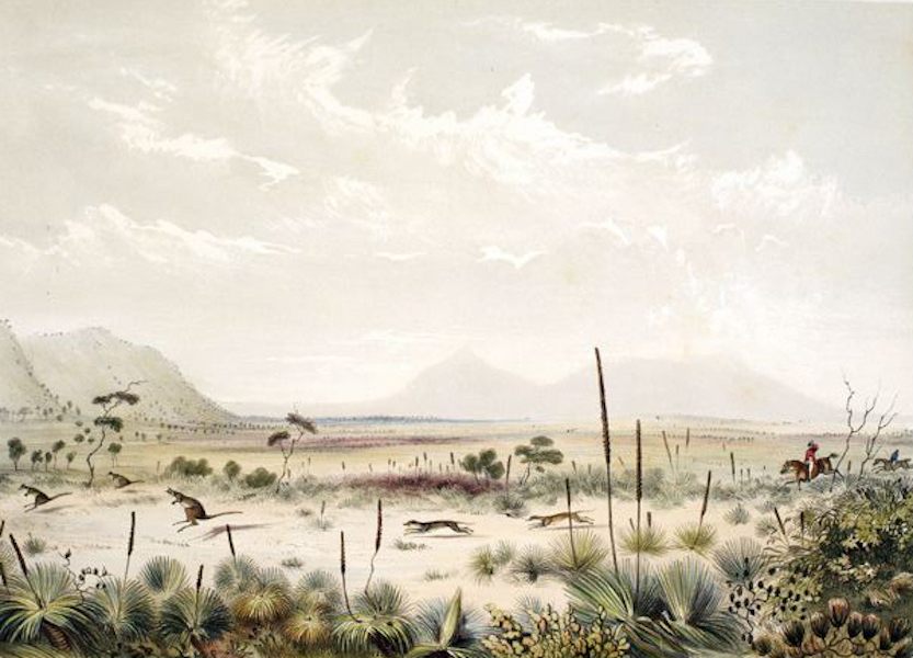 South Australia Illustrated - Kangaroo Hunting, near Port Lincoln Albert Park in the distance (1847)
