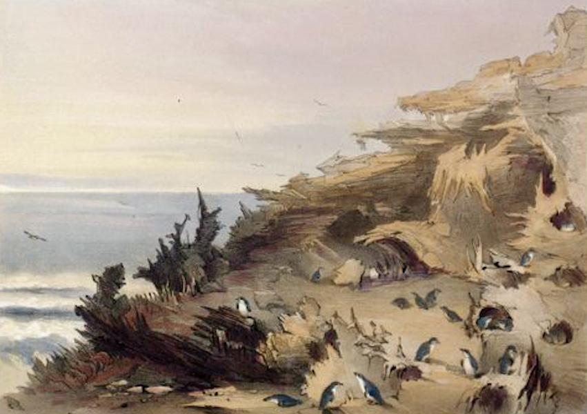 South Australia Illustrated - Penguin Island, off Rivoli Bay (1847)