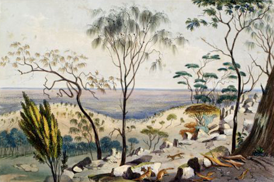 South Australia Illustrated - From the Barossa, looking over part of Angas Park (1847)