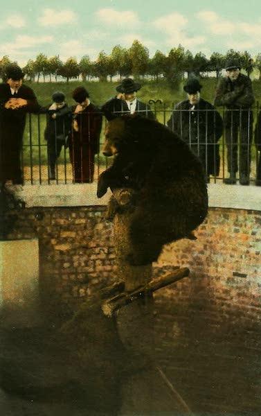 Souvenir Album of Seattle, Washington - Bear Pit, Woodlawn Park, Seattle (1900)