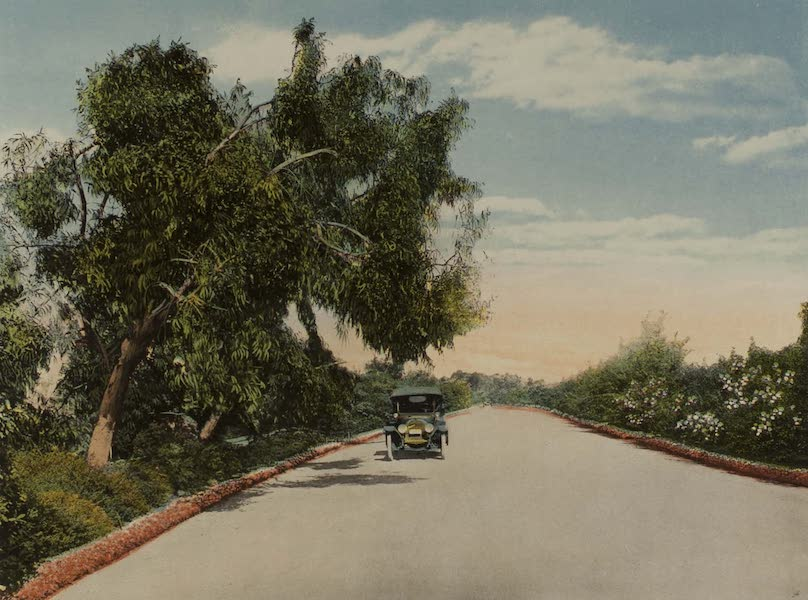 Souvenir from San Diego and Vicinity California - A Beautiful Drive in Balboa Park (1915)
