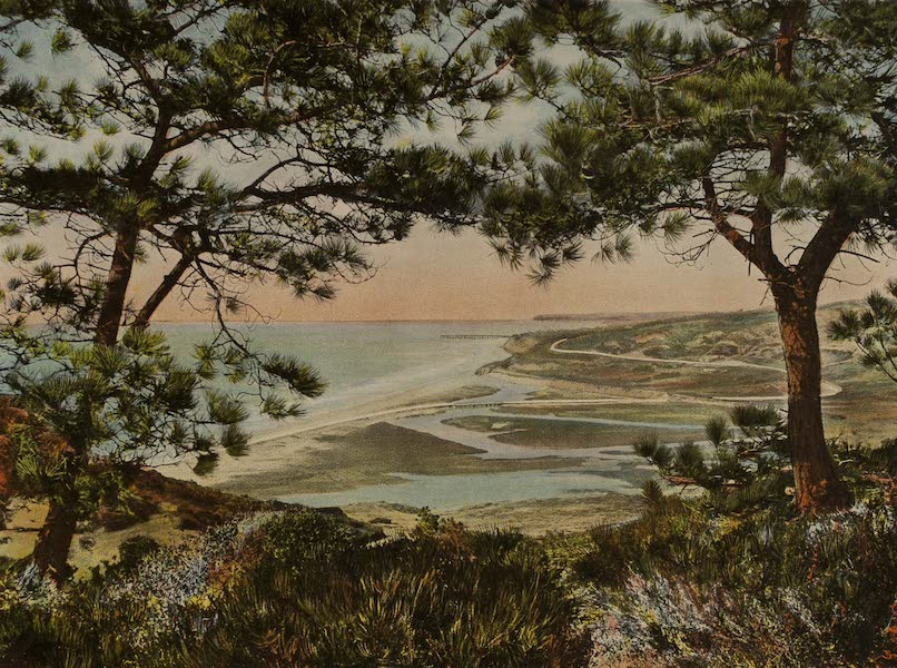 Souvenir from San Diego and Vicinity California - The Torrey Pines (1915)