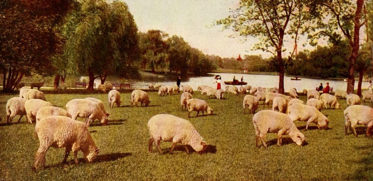 Souvenir of Chicago in Colors - Sheep in Washington Park (1910)
