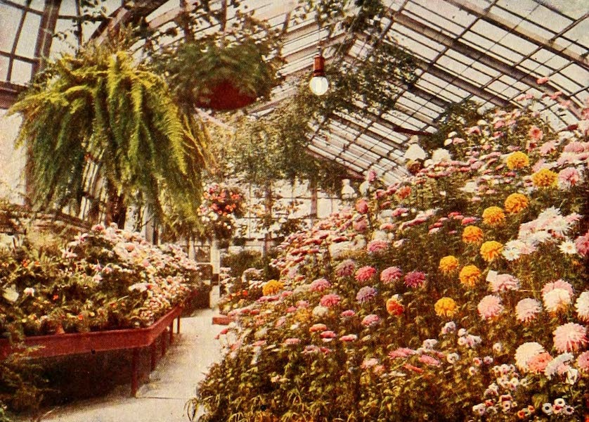 Souvenir of Chicago in Colors - Interior Lincoln Park Conservatory (1910)