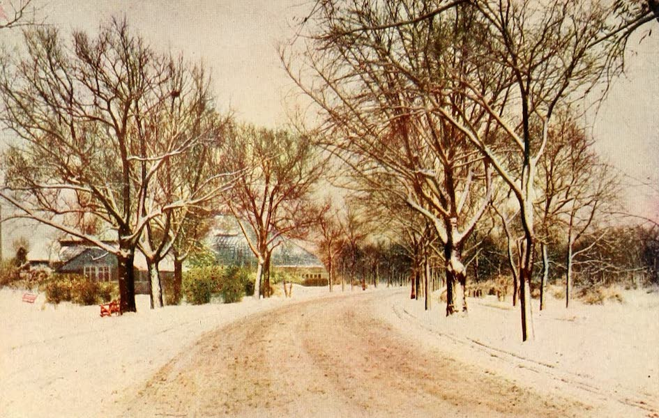 Souvenir of Chicago in Colors - Winter Scene in Lincoln Park (1910)