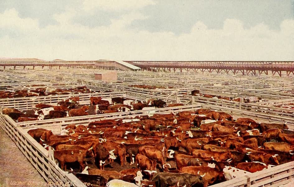 Souvenir of Chicago in Colors - Union Stock Yards (1910)