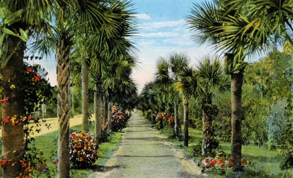 Souvenir of Daytona and Daytona Beach, Florida - Palm Walk from Hotel Ormond to Beach, Ormond Beach (1917)