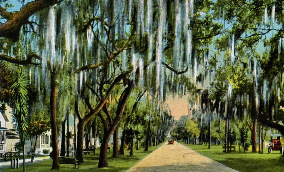 Souvenir of Daytona and Daytona Beach, Florida - Ridgewood Avenue, Daytona (1917)