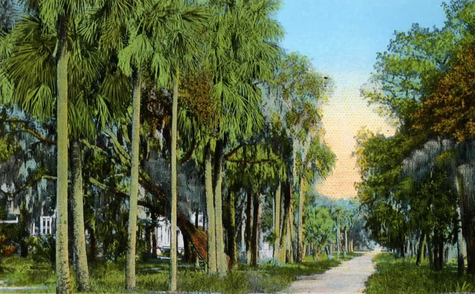 Souvenir of Daytona and Daytona Beach, Florida - Palmetto Street, Daytona (1917)