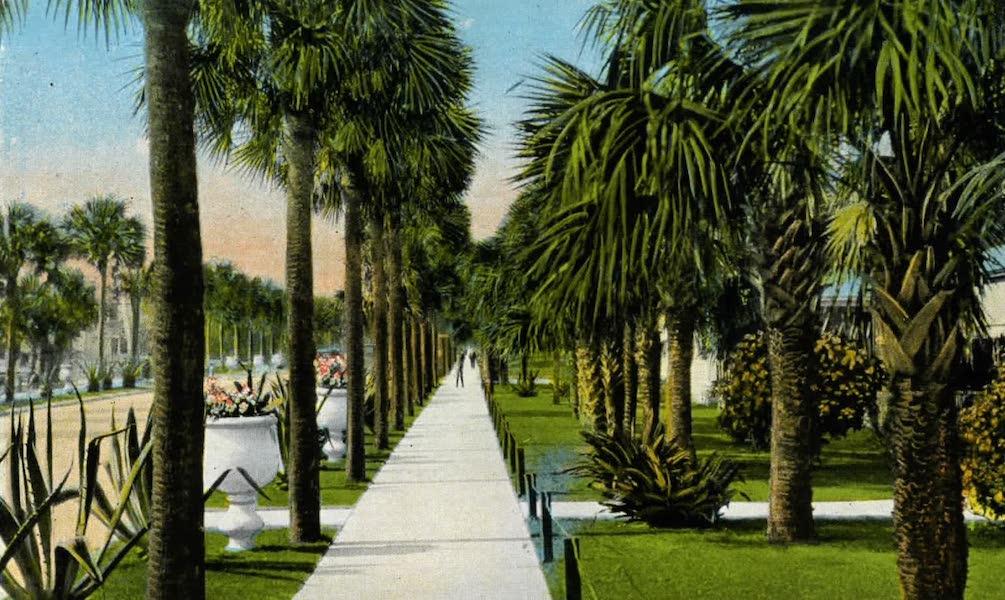 Souvenir of Daytona and Daytona Beach, Florida - Ocean Boulevard, Seabreeze (1917)