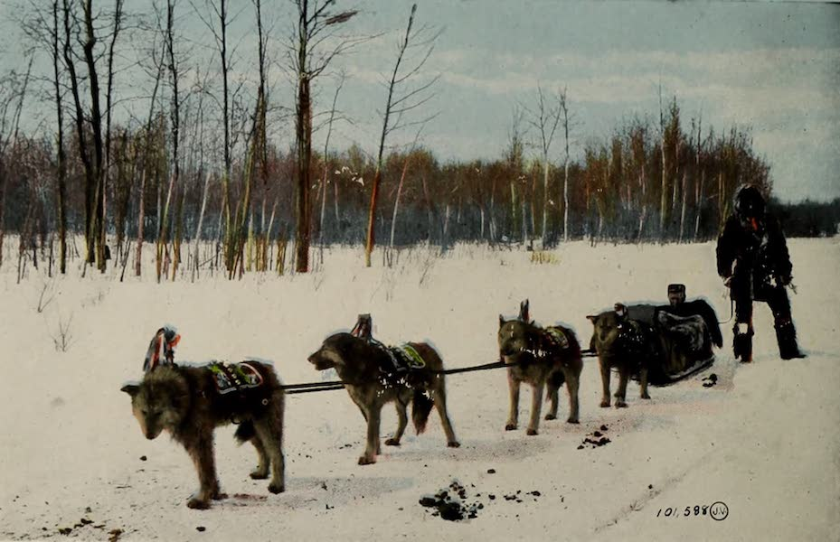 Souvenir of Edmonton, Alta. - Husky Dog Team (1910)