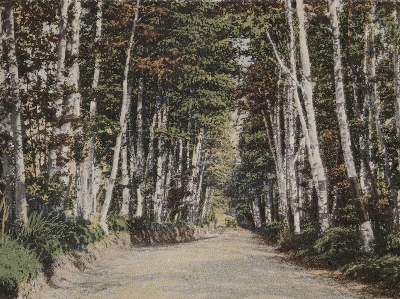 Souvenir View Book of the White Mountains - Gale River Road near Maplewood (1923)