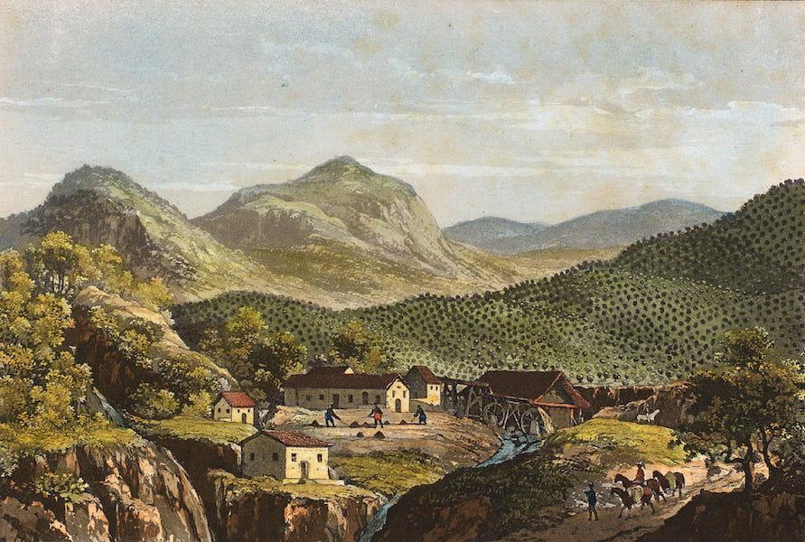 Souvenirs de Rio de Janeiro - Plantacao de Cafe (1835)
