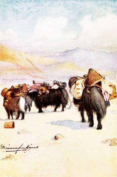 Sport and Travel in Both Tibets - Baggage Yaks (1909)