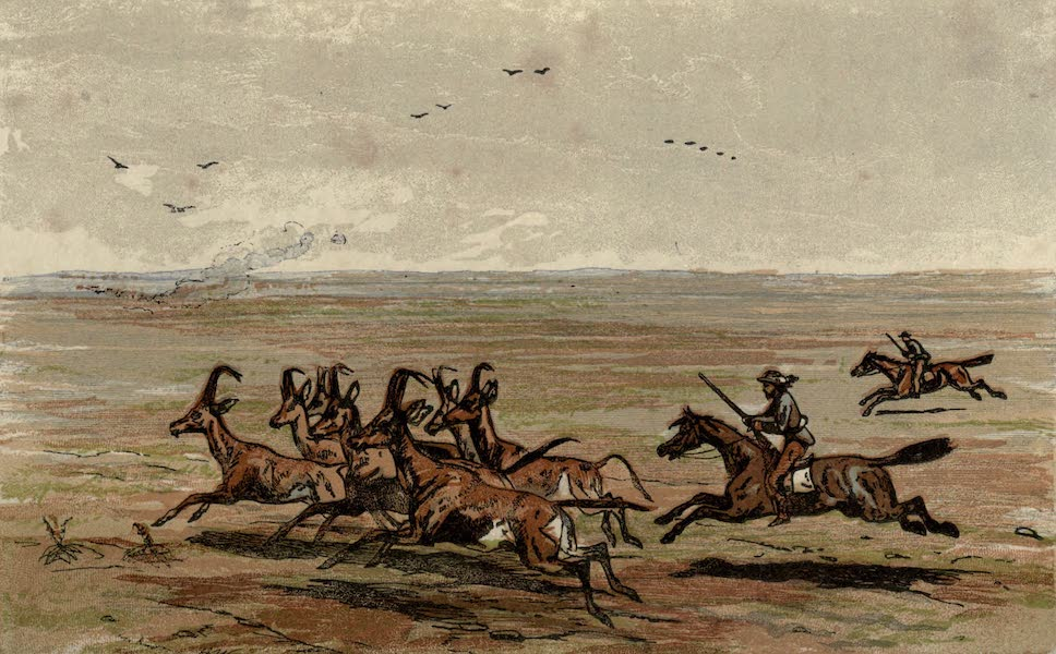 Sporting Scenes Amongst the Kaffirs of South Africa - Hunting the Hartbeest (1858)