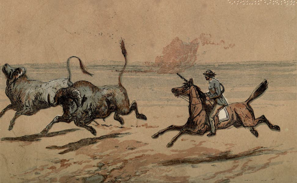 Sporting Scenes Amongst the Kaffirs of South Africa - Catching the Buffalo (1858)