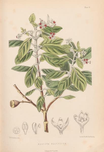 St. Helena: A Description of the Island - Nesiota Elliptica (1875)