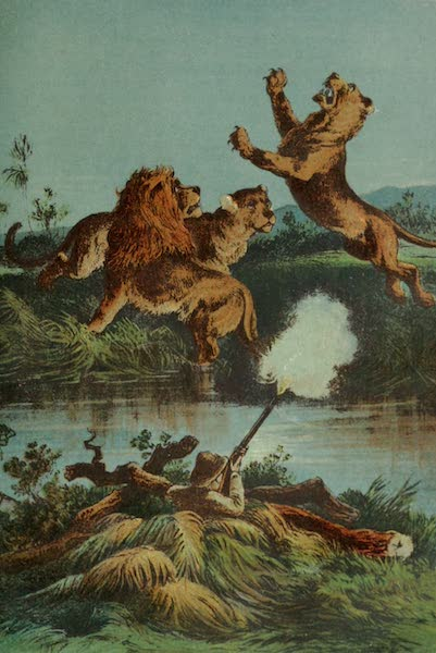 Lion Hunting at Night
