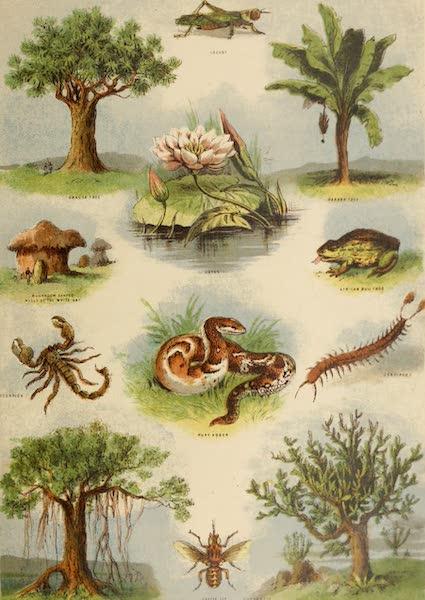 African Flora and Fauna