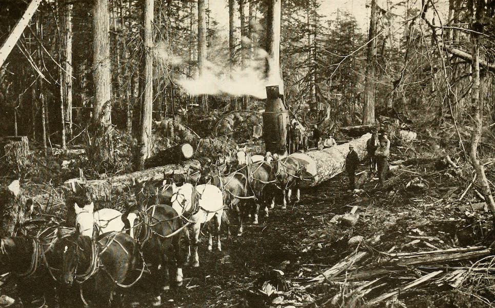 Sunset Canada, British Columbia and Beyond - Logging on Vancouver Island (1918)