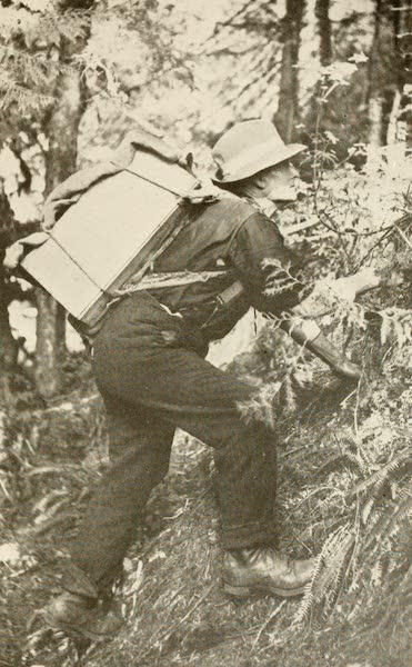 Sunset Canada, British Columbia and Beyond - A Gold Prospector (1918)