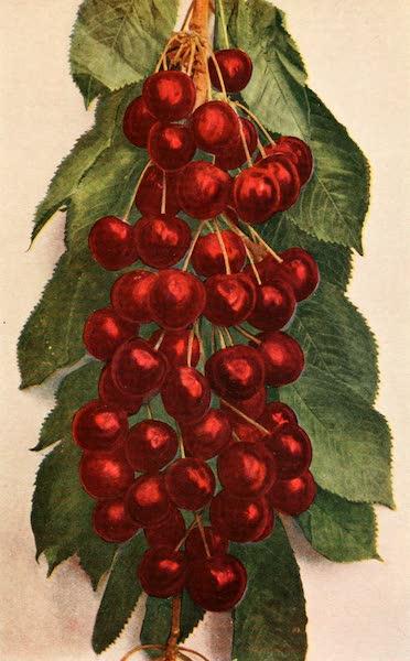 Sunset Canada, British Columbia and Beyond - Cherries grown at Kelowna (1918)