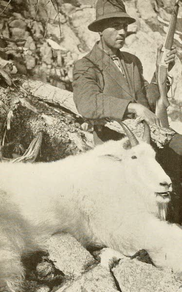 """Sunset Canada, British Columbia and Beyond - """"Big Billy,"""" the """"Record"""" Mountain Goat (1918)"""