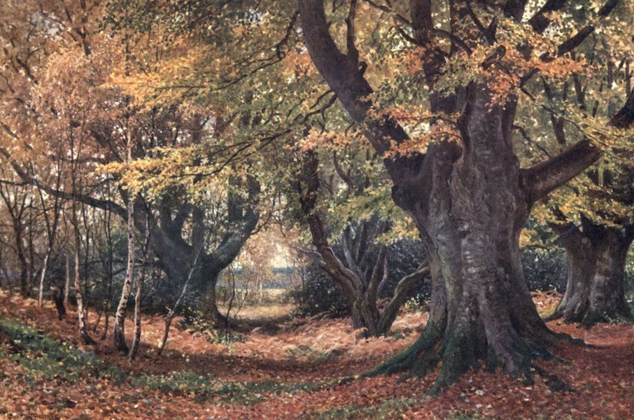 Surrey Painted and Described - Beeches in Autumn, near Godalming (1906)