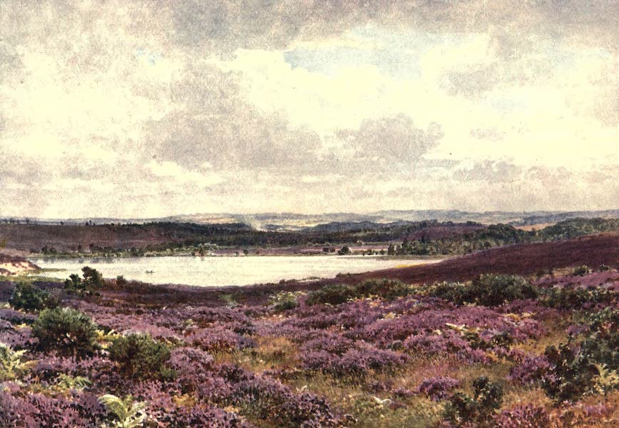 Surrey Painted and Described - The Great Pond, Frensham (1906)