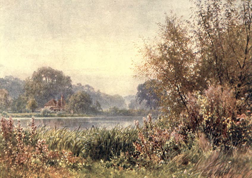 Surrey Painted and Described - Autumn Weeds, Chilworth (1906)