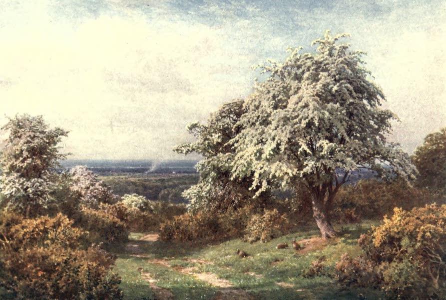 Surrey Painted and Described - The Pride of Spring, Newlands Corner (1906)