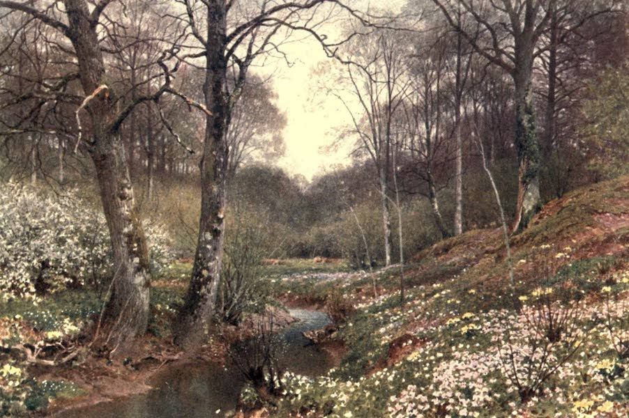 Surrey Painted and Described - Spring Blossoms, near Dorking (1906)