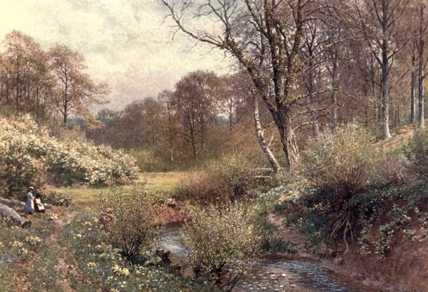 Surrey Painted and Described - In Spring Woods, Ockley (1906)