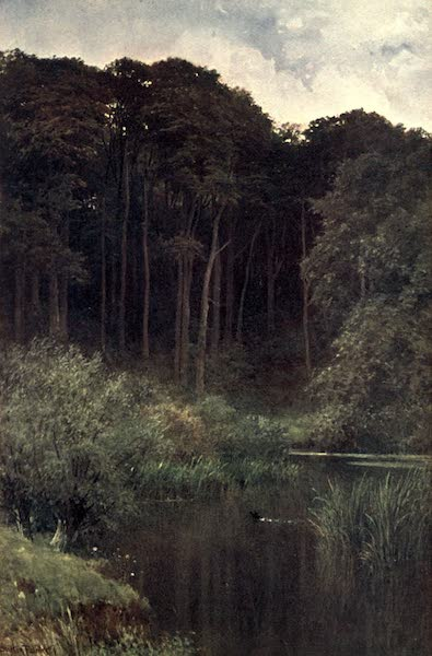 Surrey Painted and Described - Woodland Depths, Wotton (1906)