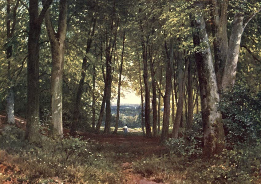Surrey Painted and Described - Deer-Leap Wood, Wotton (1906)