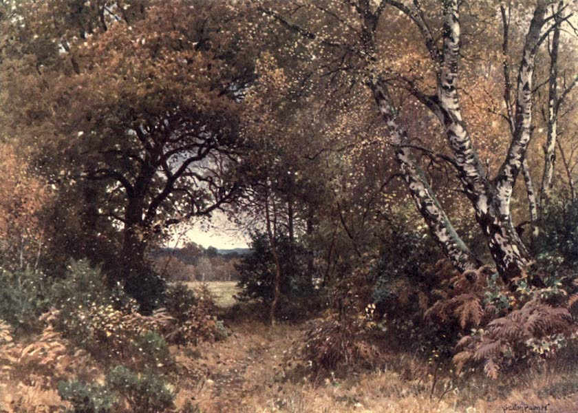 Surrey Painted and Described - The Edge of a Wood, Royal Common (1906)