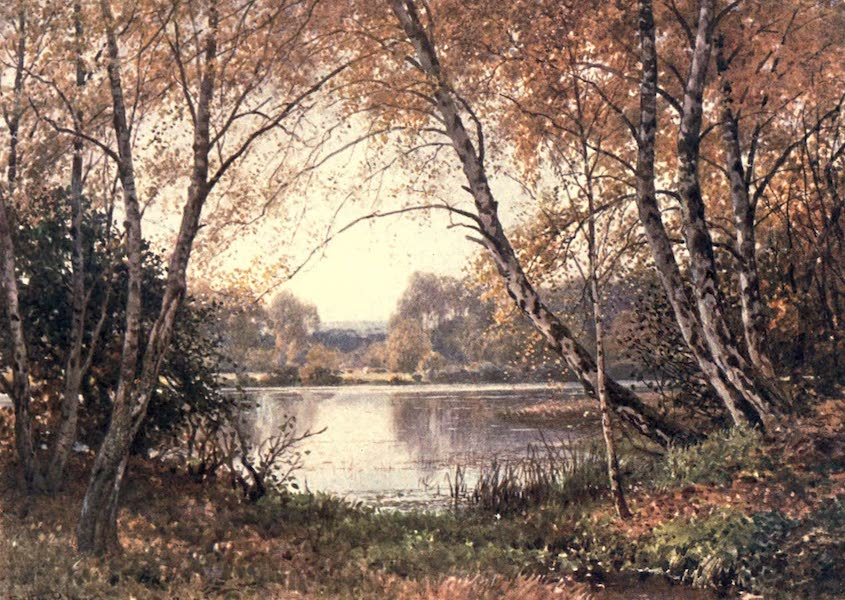 Surrey Painted and Described - The Verge of the Pond, Royal Common (1906)