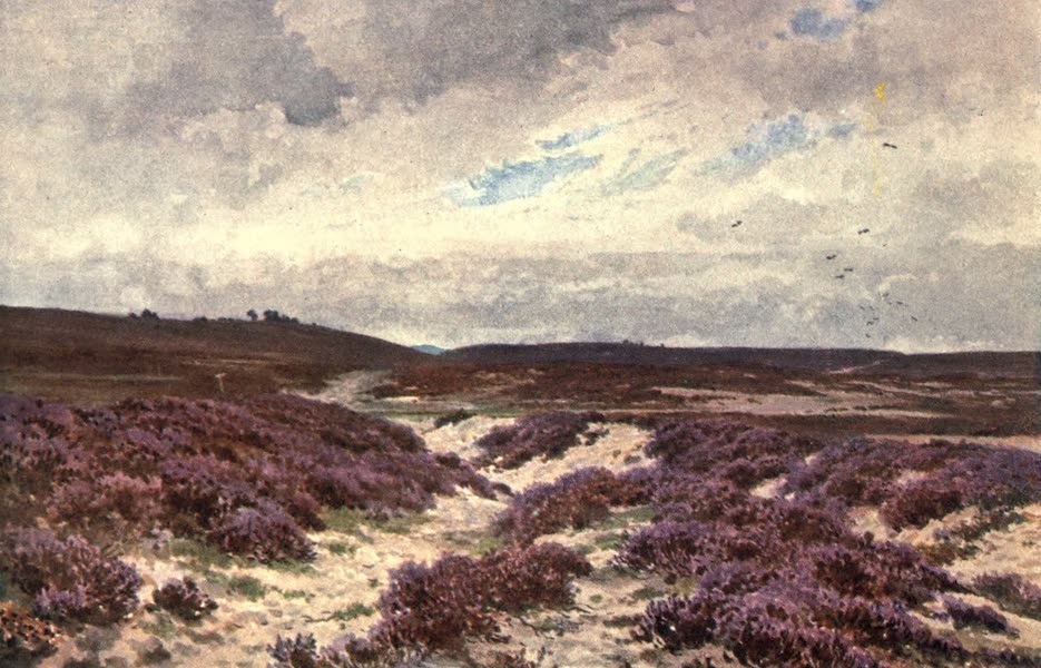 Surrey Painted and Described - Frensham Common (1906)